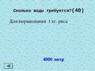 Сколько воды требуется?(40) 4000 литр Для выращевания 1 кг. риса