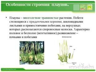 Особенности строения плаунов. Плауны – многолетние травянистые растения. Побе