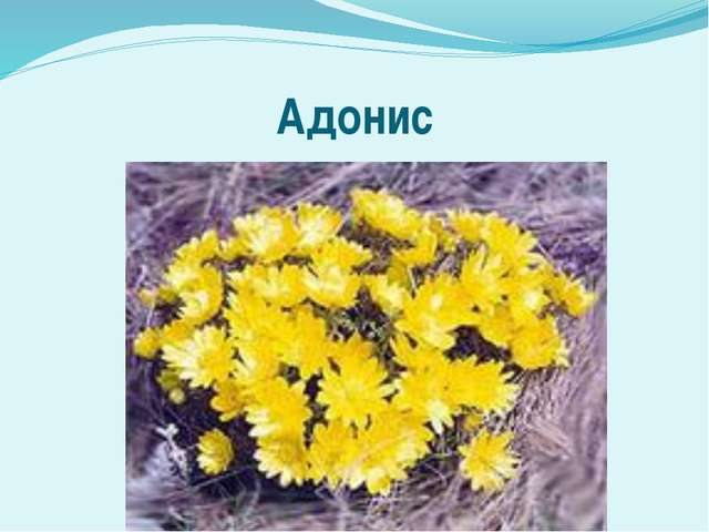 Адонис