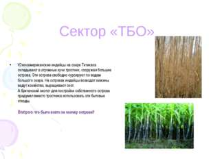 Южноамериканские индейцы на озере Титикака складывают в огромные кучи тростни