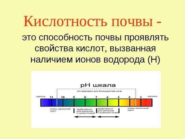 Кислотность почвы - это способность почвы проявлять свойства кислот, вызванна...