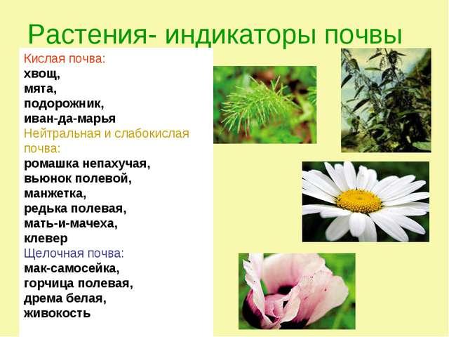 Растения- индикаторы почвы Кислая почва: хвощ, мята, подорожник, иван-да-марь...