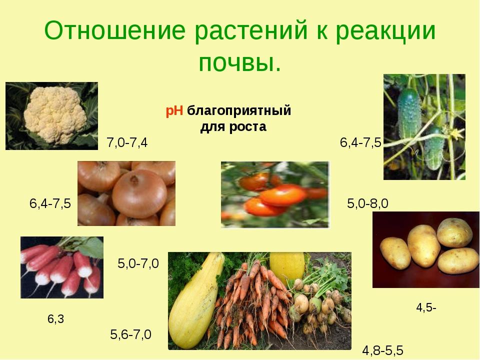 Отношение растений к реакции почвы. рН благоприятный для роста 7,0-7,4 6,4-7,...