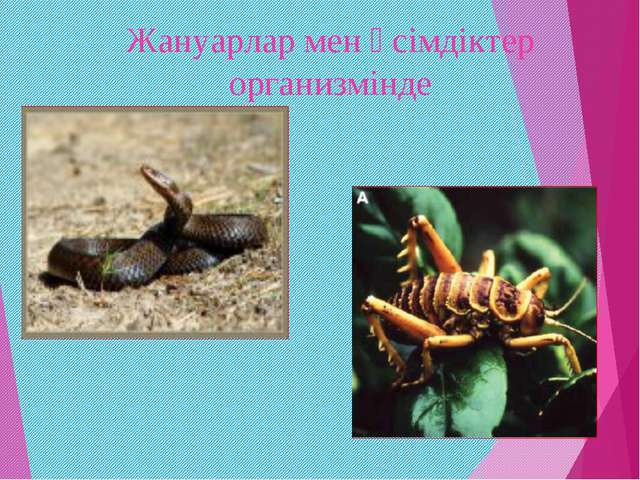 Жануарлар мен өсімдіктер организмінде