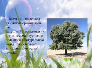 Матеин – выдержка из южноамериканского чая матэIlexParaguarensis(кстати,