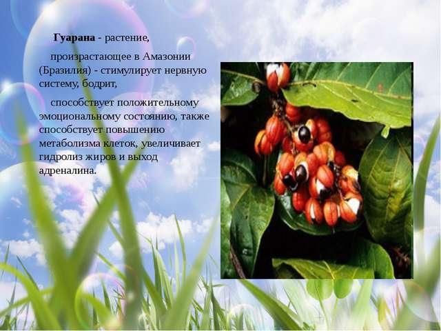 Гуарана - растение, произрастающее в Амазонии (Бразилия) - стимулирует нервн...