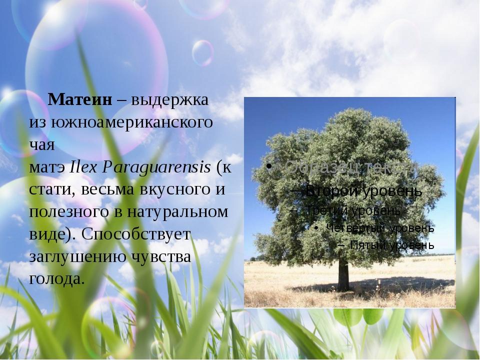 Матеин – выдержка из южноамериканского чая матэIlexParaguarensis(кстати,...