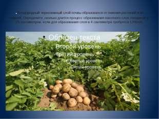 .Плодородный черноземный слой почвы образовался от гниения растений и их корн