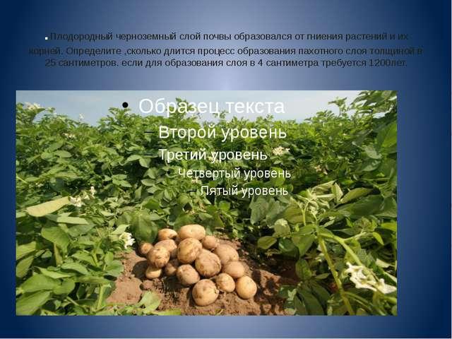 .Плодородный черноземный слой почвы образовался от гниения растений и их корн...