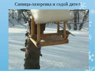 Синица-лазоревка и седой дятел