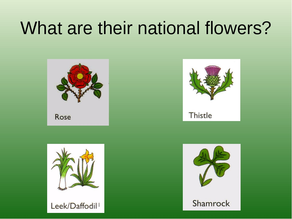 What are their national flowers?