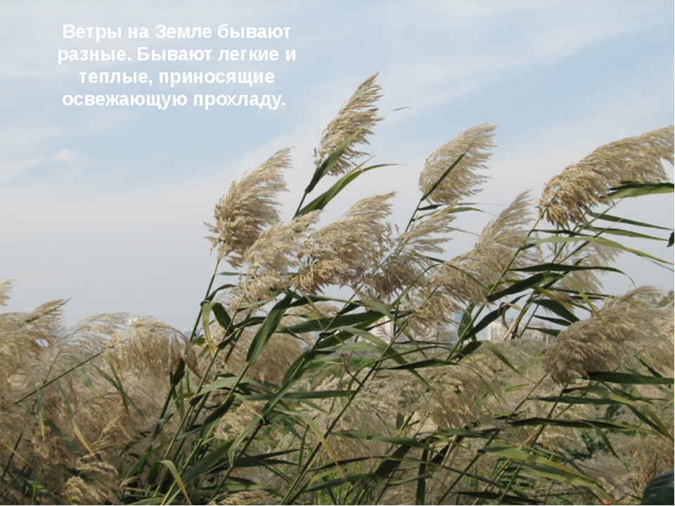 Ветры на Земле бывают разные. Бывают легкие и теплые, приносящие освежающую п...