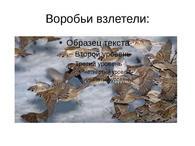 Воробьи взлетели: