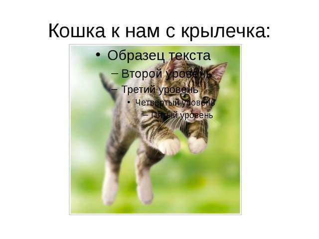 Кошка к нам с крылечка: