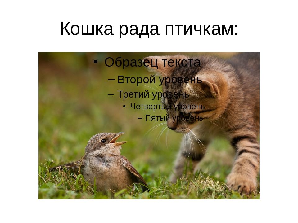 Кошка рада птичкам:
