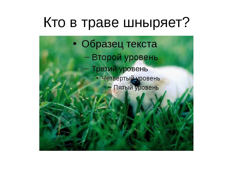 Кто в траве шныряет?