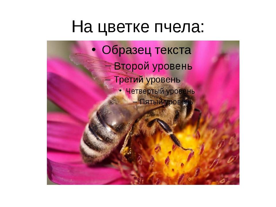 На цветке пчела: