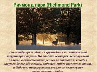 Ричмонд парк (Richmond Park) Ричмонд-парк – один из крупнейших по занимаемой