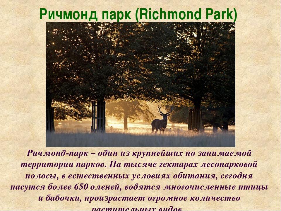 Ричмонд парк (Richmond Park) Ричмонд-парк – один из крупнейших по занимаемой...