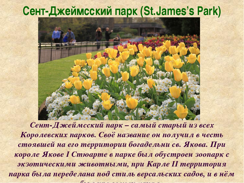 Сент-Джеймсский парк (St.James's Park) Сент-Джеймсский парк – самый старый из...