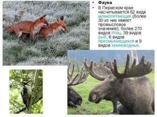 Фауна В Пермском крае насчитывается 62 вида млекопитающих (более 30 из них им