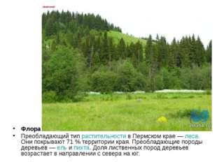 Флора Преобладающий тип растительности в Пермском крае— леса. Они покрывают