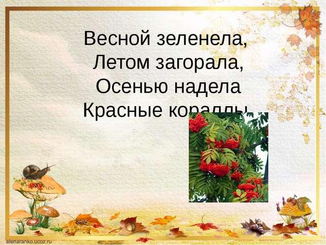 Весной зеленела, Летом загорала, Осенью надела Красные кораллы.