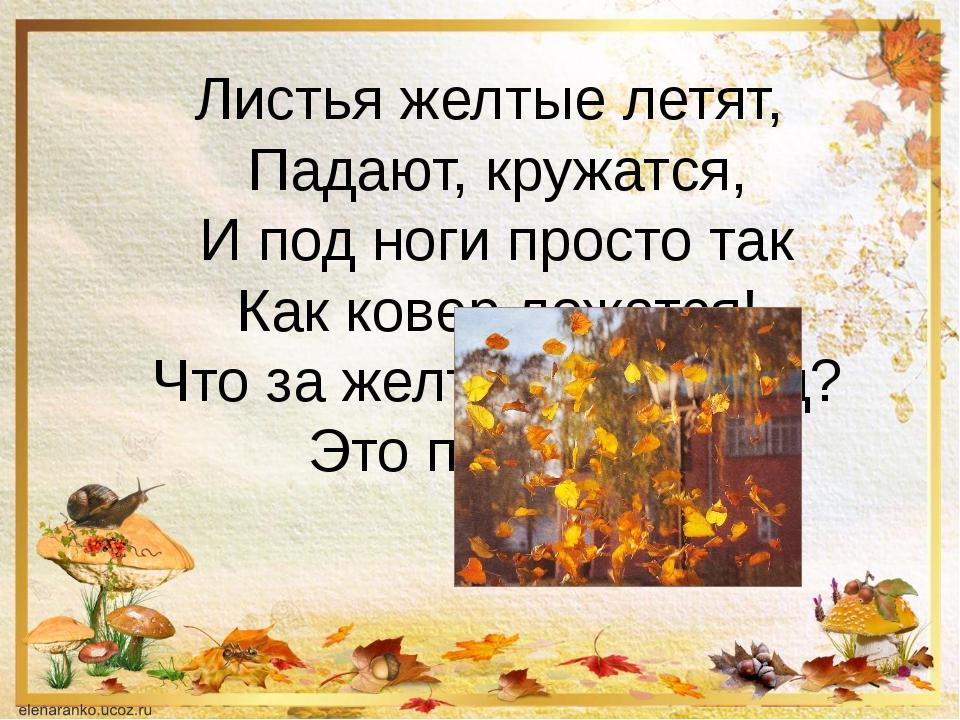 Листья желтые летят, Падают, кружатся, И под ноги просто так Как ковер ложатс...