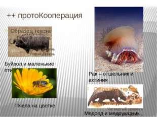 ++ протоКооперация Рак – отшельник и актиния Буйвол и маленькие птицы Медоед