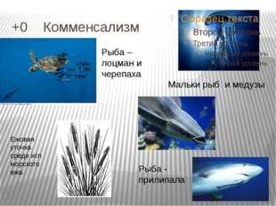 +0 Комменсализм Мальки рыб и медузы Рыба - прилипала Рыба – лоцман и черепах