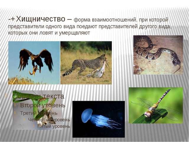 -+Хищничество – форма взаимоотношений, при которой представители одного вида...