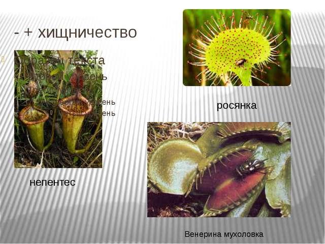- + хищничество непентес росянка Венерина мухоловка