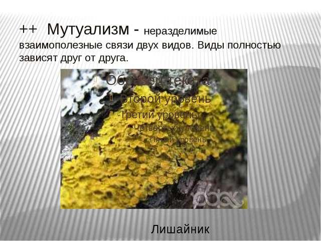 ++ Мутуализм - неразделимые взаимополезные связи двух видов. Виды полностью з...
