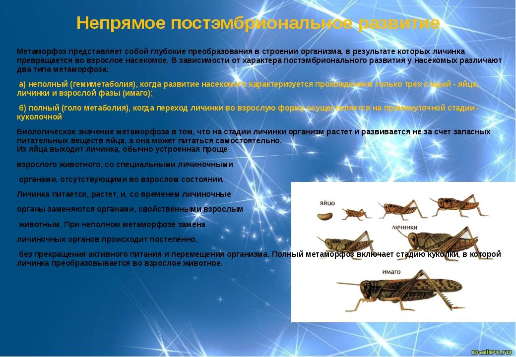 Метаморфоз представляет собой глубокие преобразования в строении организма, в...