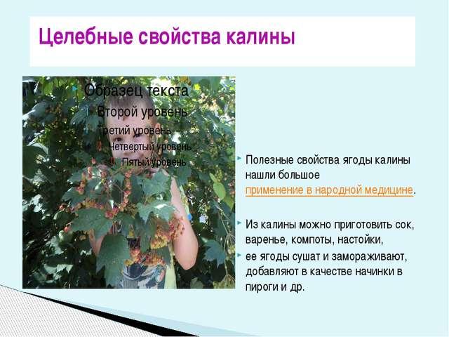 Полезные свойства ягоды калины нашли большоеприменение в народной медицине....