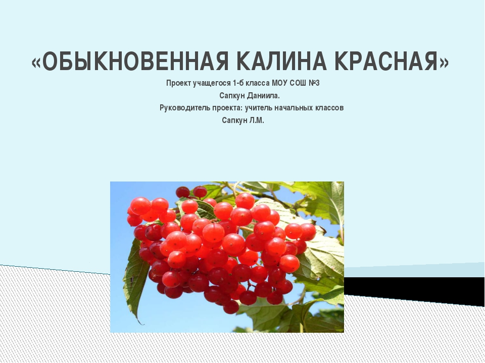 «ОБЫКНОВЕННАЯ КАЛИНА КРАСНАЯ» Проект учащегося 1-б класса МОУ СОШ №3 Сапкун...