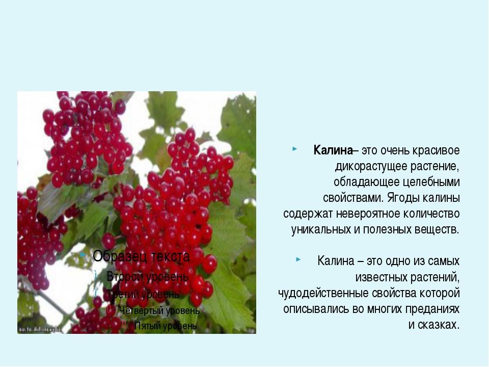 Калина– это очень красивое дикорастущее растение, обладающее целебными свойс...