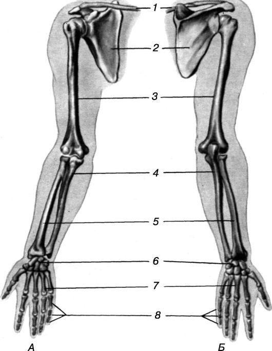 http://vmede.org/sait/content/Biologiya_4ebishev_grinev_2010/img/3733.jpg