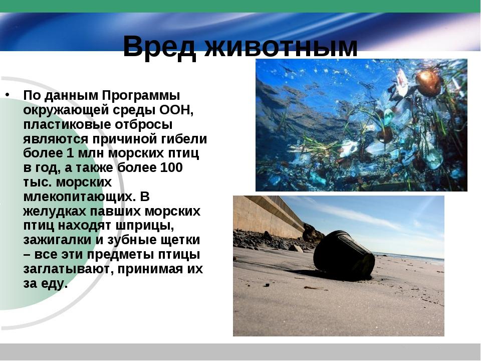 Вред животным По данным Программы окружающей среды ООН, пластиковые отбросы я...