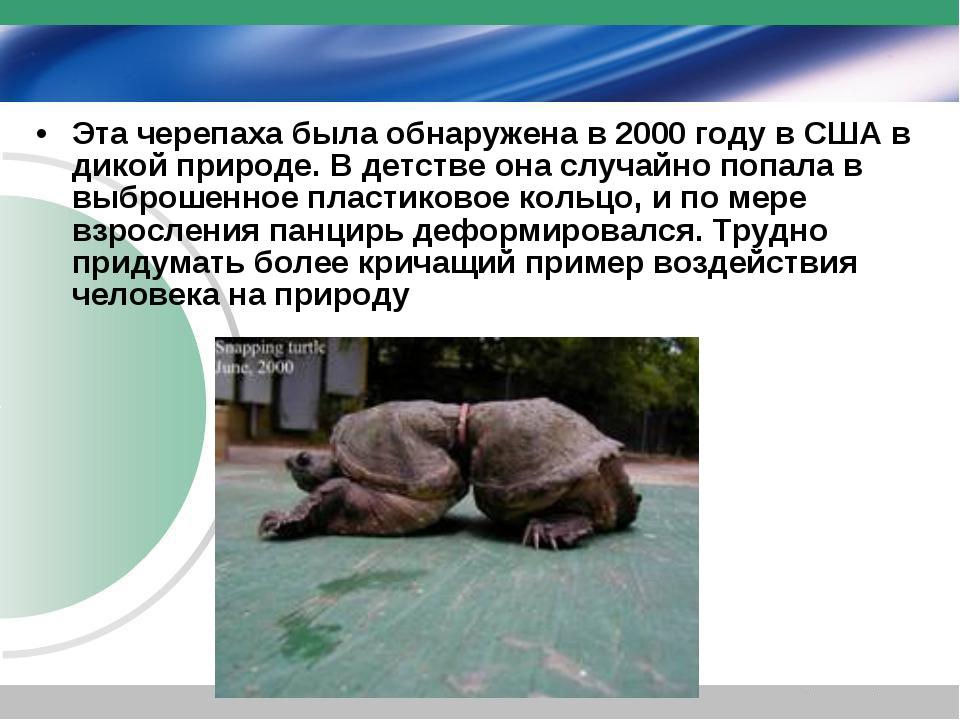 Эта черепаха была обнаружена в 2000 году в США в дикой природе. В детстве она...