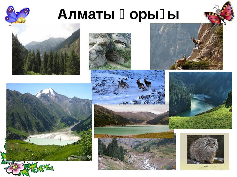Алматы қорығы