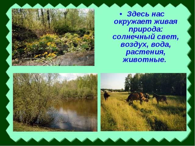 Здесь нас окружает живая природа: солнечный свет, воздух, вода, растения, жив...