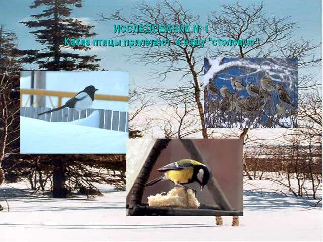 """ИССЛЕДОВАНИЕ № 1 Какие птицы прилетают в нашу """"столовую"""""""