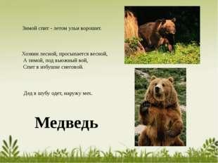 Медведь Зимой спит - летом ульи ворошит. Дед в шубу одет, наружу мех. Хозяин
