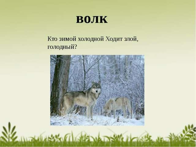 Кто зимой холодной Ходит злой, голодный? волк
