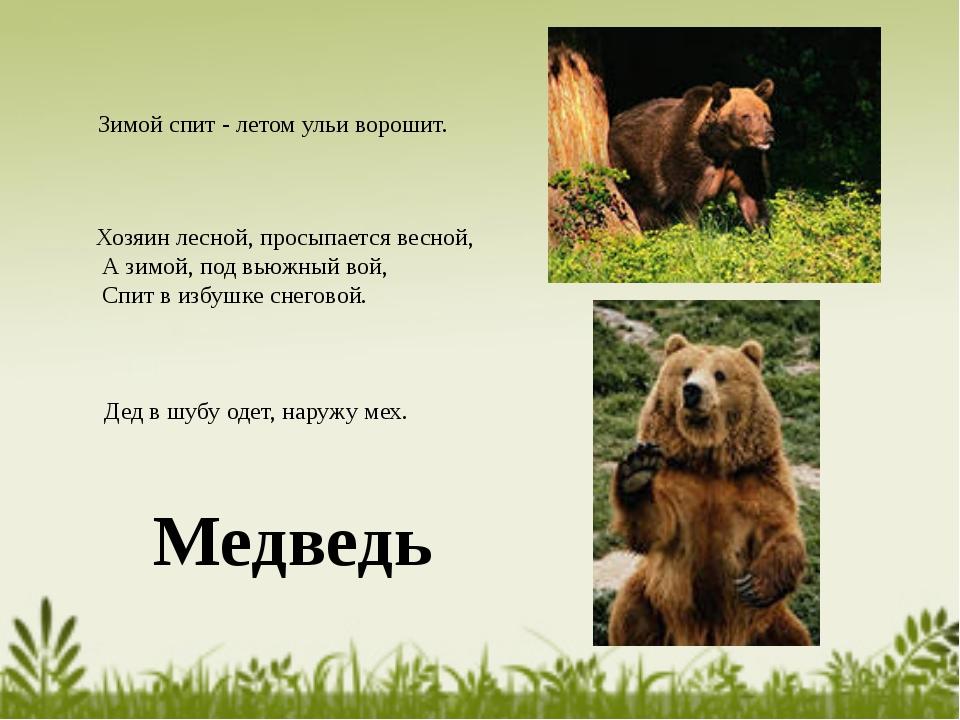 Медведь Зимой спит - летом ульи ворошит. Дед в шубу одет, наружу мех. Хозяин...