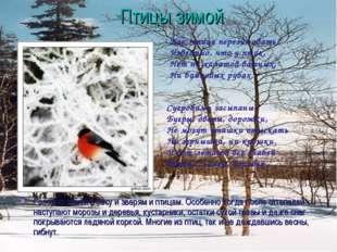 Птицы зимой Голодно зимой в лесу и зверям и птицам. Особенно когда после отте