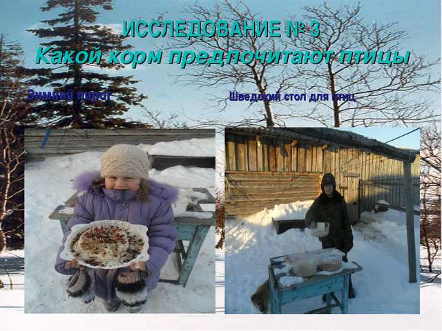 ИССЛЕДОВАНИЕ № 3 Какой корм предпочитают птицы Зимний пирог Шведский стол для...