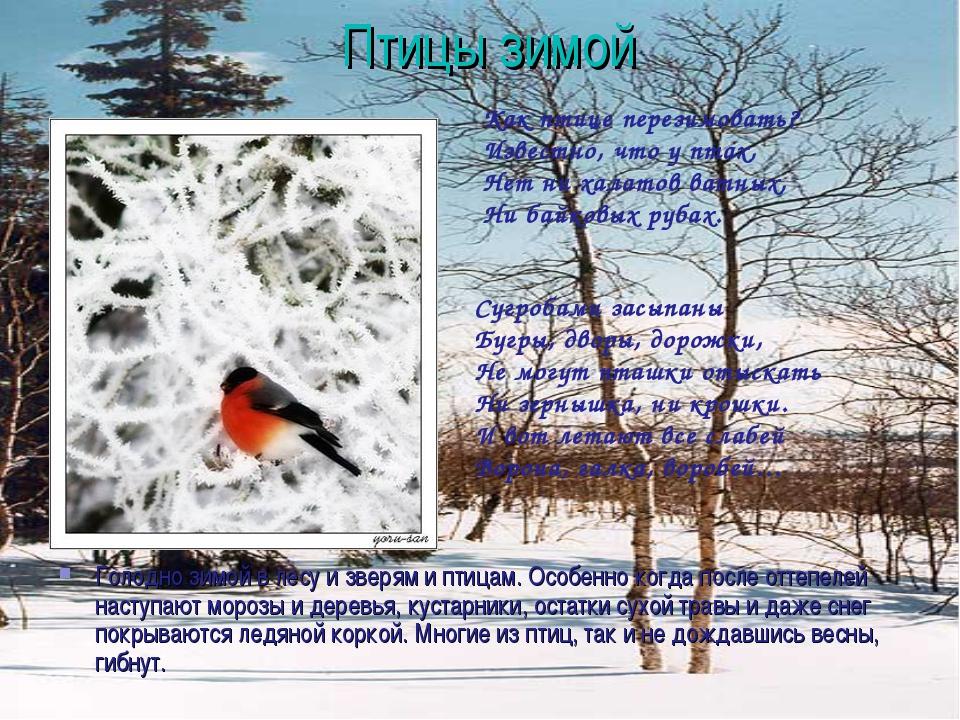 Птицы зимой Голодно зимой в лесу и зверям и птицам. Особенно когда после отте...