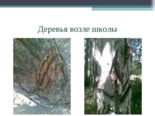 Деревья возле школы